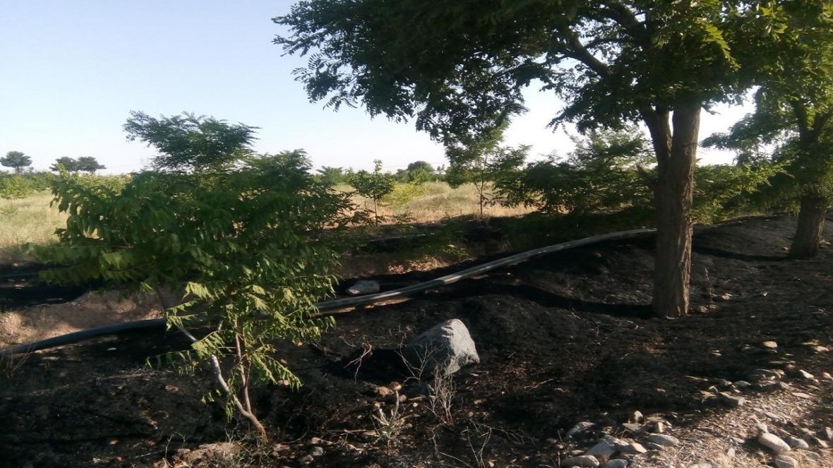 نجات چند باغ گیلاس در نیشابور از آتش سوزی