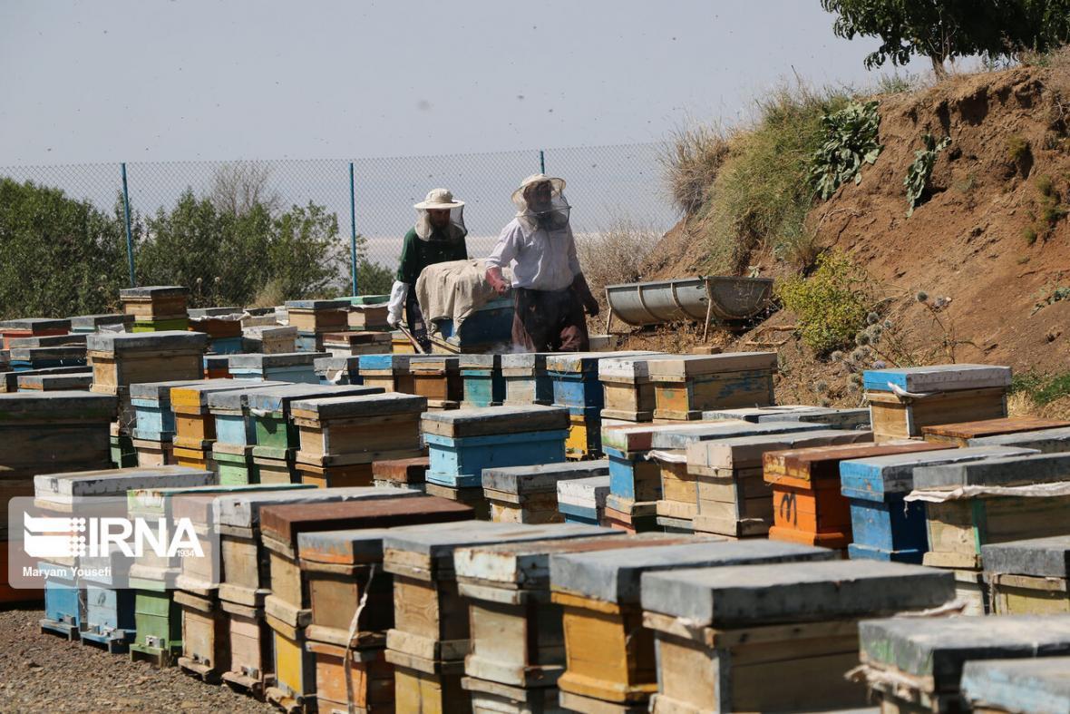 خبرنگاران آذربایجان شرقی رتبه دوم تولید عسل در کشور را دارد