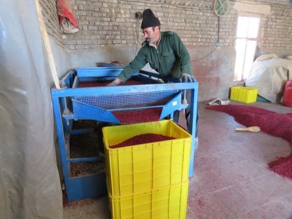 خبرنگاران 2 واحد فرآوری و بسته بندی کشاورزی در درمیان به بهره برداری رسید