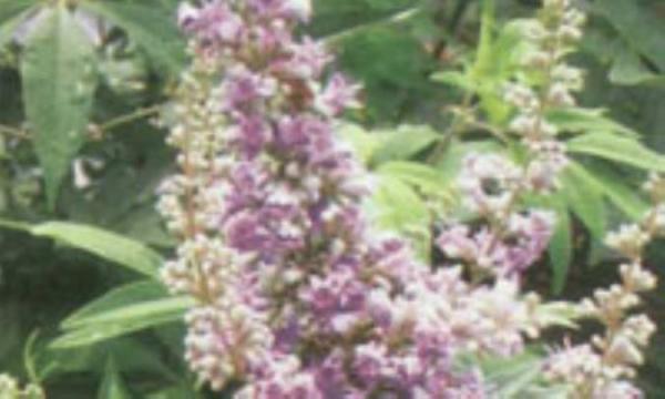 داروی گیاهی ویتاگنوس و اختلالات هورمونی زنان